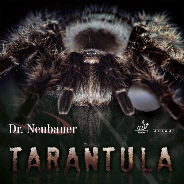 tarantula_1